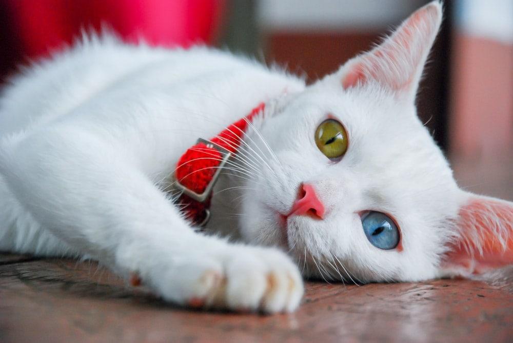 white cat on a floor