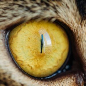 Cat Pupils - What Your Cats Eyes Are Telling You