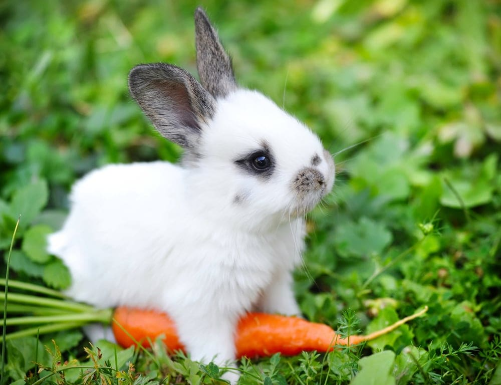 baby rabbit walks in a park