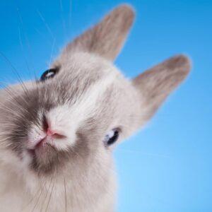 Understanding Rabbit Body Language