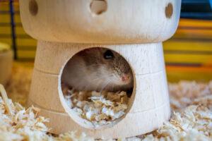 hamster hide home