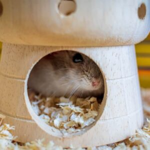 Why Does my Hamster Hide?