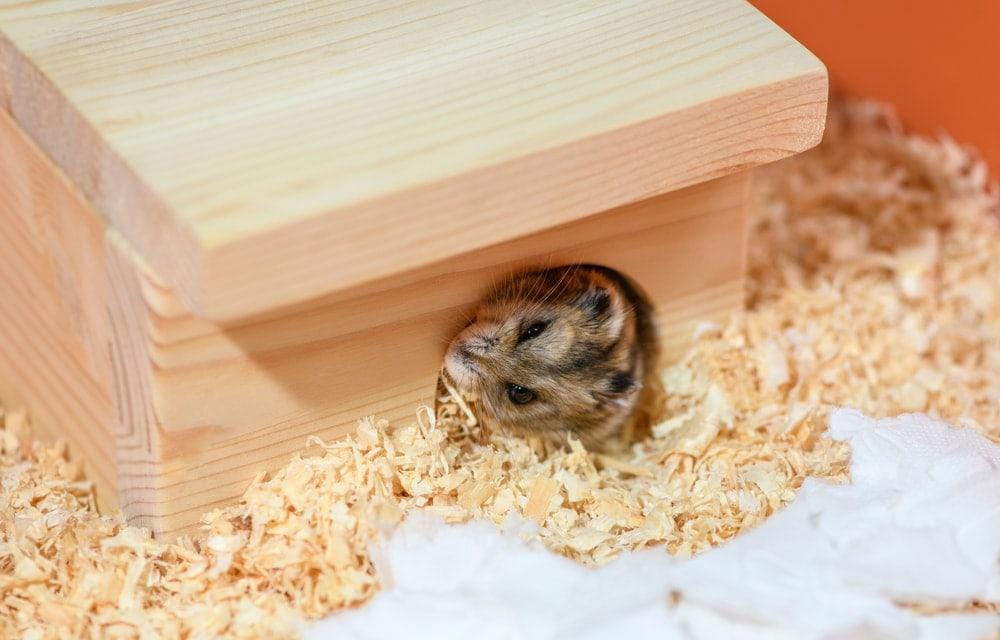 hamster hide