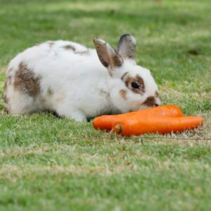 Rabbit Treats: What is Safe To Give Them