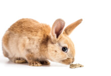 Poisonous Foods for Rabbits