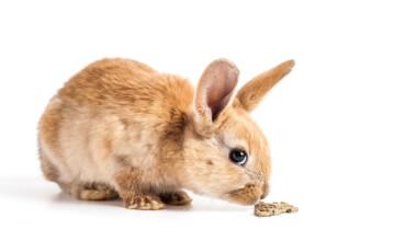 rabbit eat whit bg