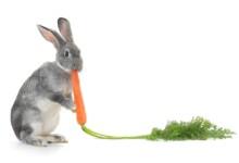 Do Rabbits Eat Carrots?