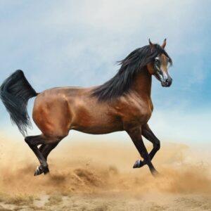 10 Most Popular Horse Breeds