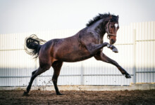 How Many Breeds Of Horses Are There?
