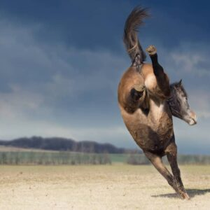 Reasons Why Your Horse Bucks & How to Stop It