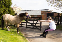 Why Horses Balk & What to do About It