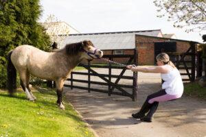 bulking horse