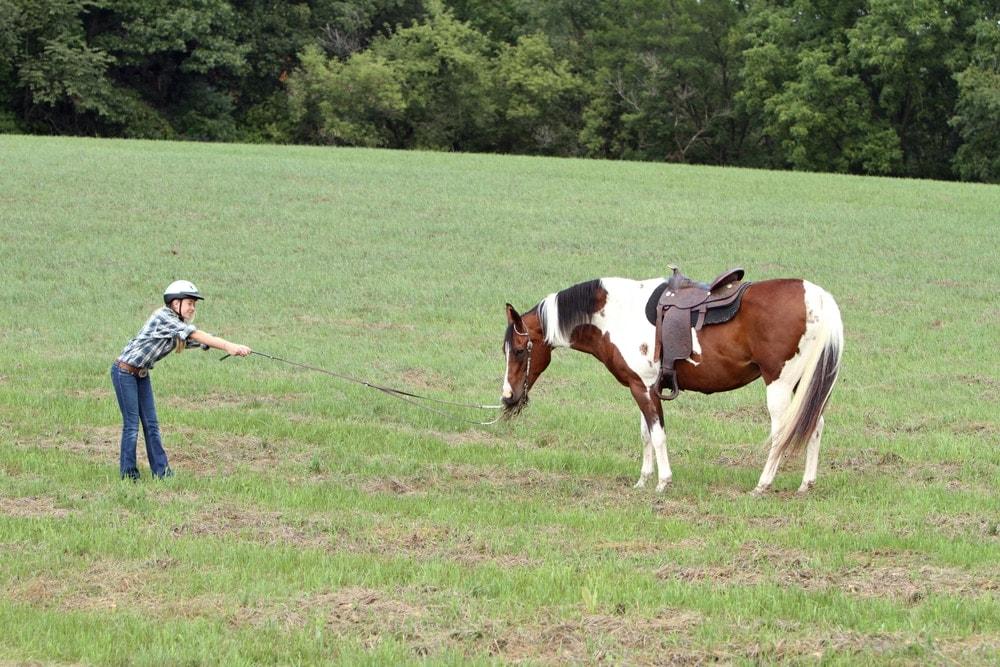 bulking horse in a field