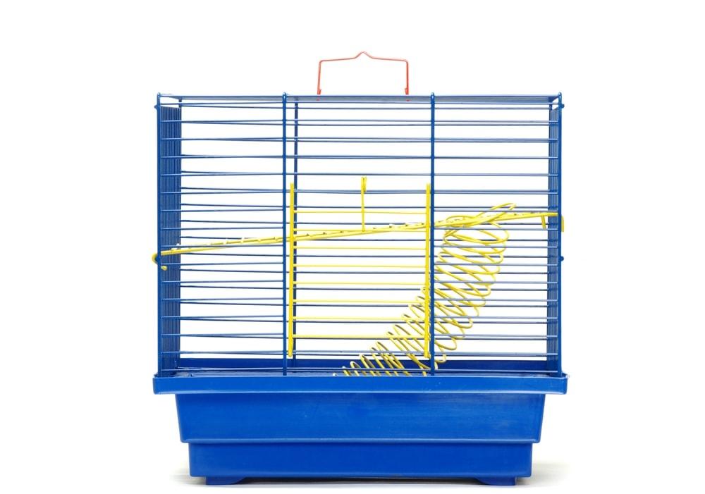 chloroplast cage