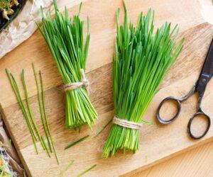 cut wheatgrass