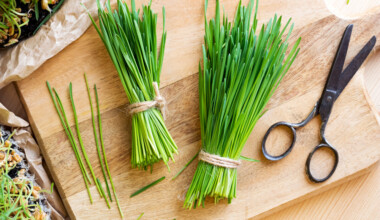 cut wheatgrass