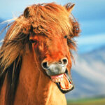 10 Interesting Horse Facts