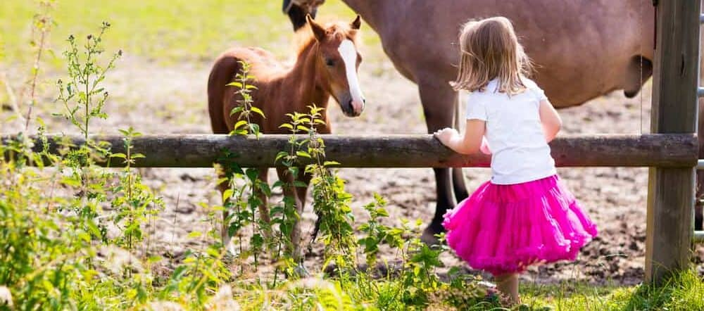 girl and baby horse e1590497491355