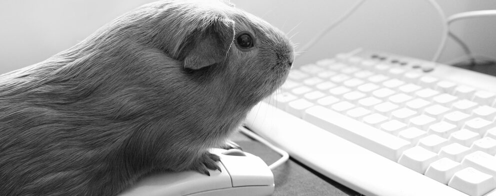 guinea pig and computer e1589638029514
