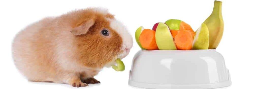 guinea pig and fruits e1589730433764