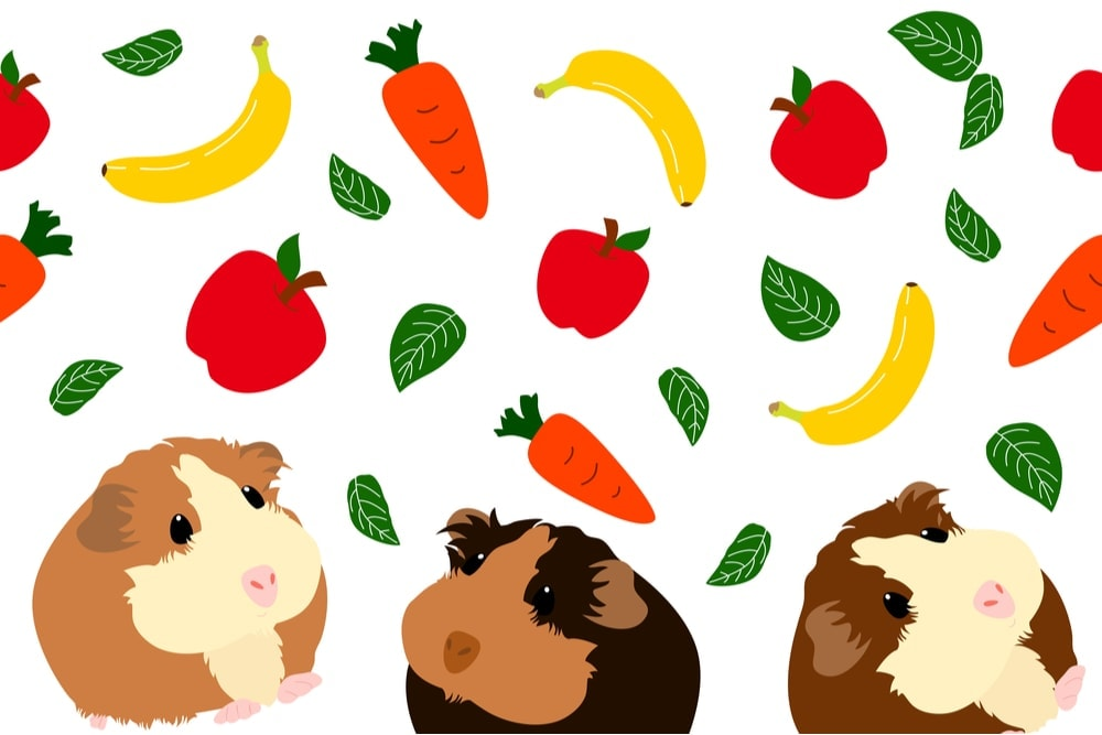 guinea pig banan apples