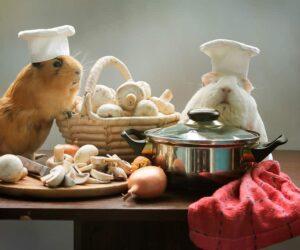 guinea pig cook
