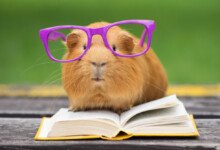 50 Great Names for Guinea Pigs