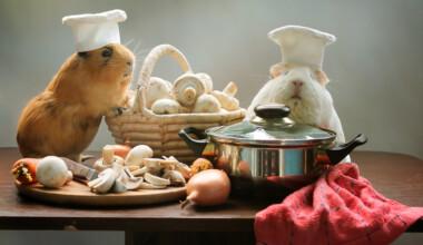 guinea pigs cook