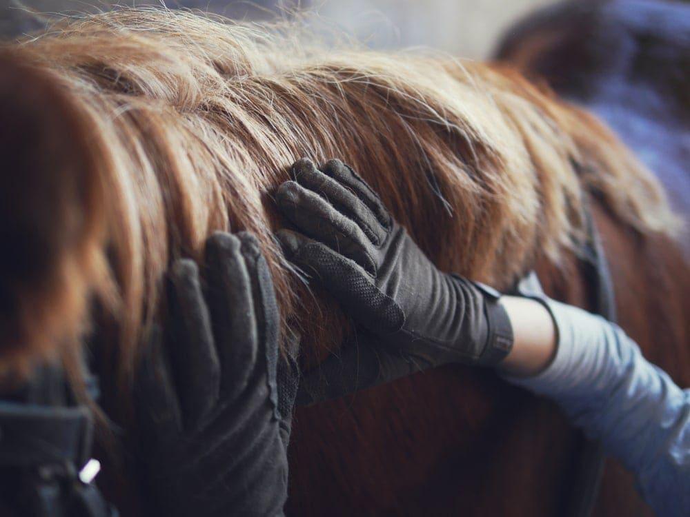 hands horse skin