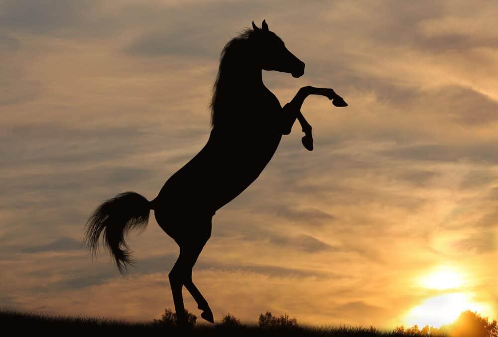 hearing horse shadow e1590489728726