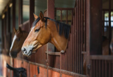 How Much Does It Cost To Board a Horse?