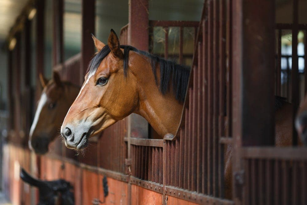 horse at house