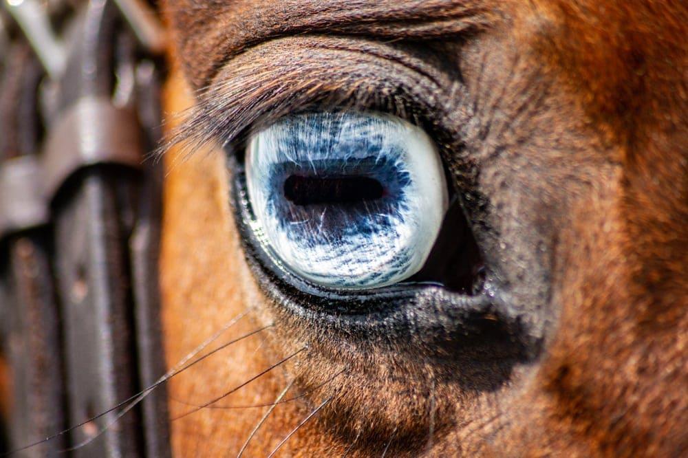 horse blue eyes