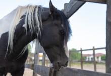 Can Horses Eat Wood?