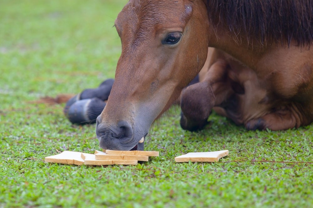 horse eating bread