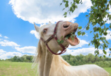 What Do Horses Eat? - Food Guide