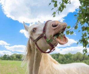 horse eats leaves