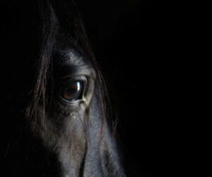 horse eye white black