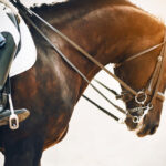 How To Teach Your Horse To Neck Rein
