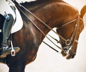 horse neck rein