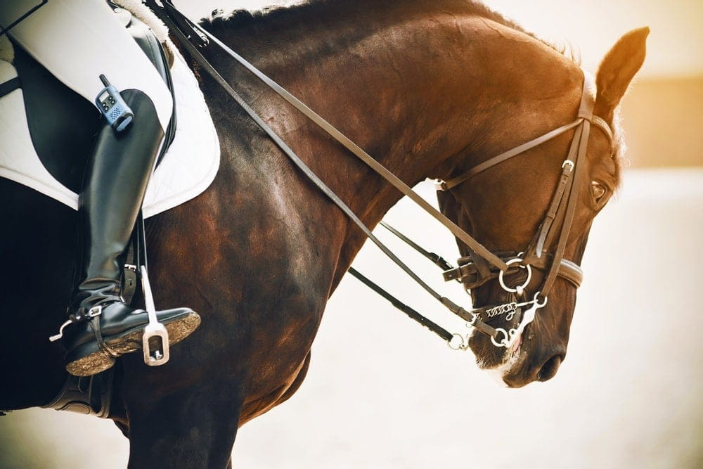 teaching a horse to neck rein