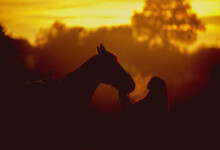 How Often Should You Ride an Older Horse?