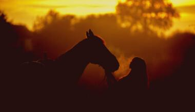 horse sunset 1 e1590590204213