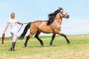 lunge horse beautiful e1590490262705