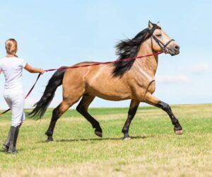 lunge horse beautiful e1590490262705