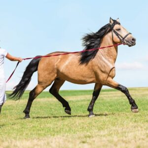 How to Lunge Train Your Horse