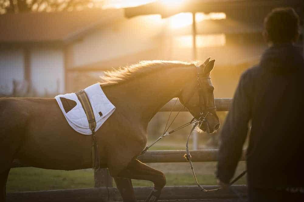 lunge horse sunset e1590490293604