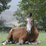 How Long Do Horses Live? Average Horse Lifespan