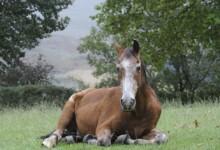 How Long Do Horses Live? Average Horse Lifespan