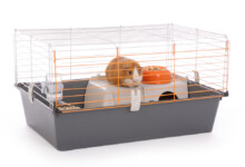 4 Different Types of Guinea Pig Cages